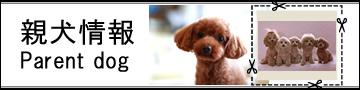 写真:親犬情報
